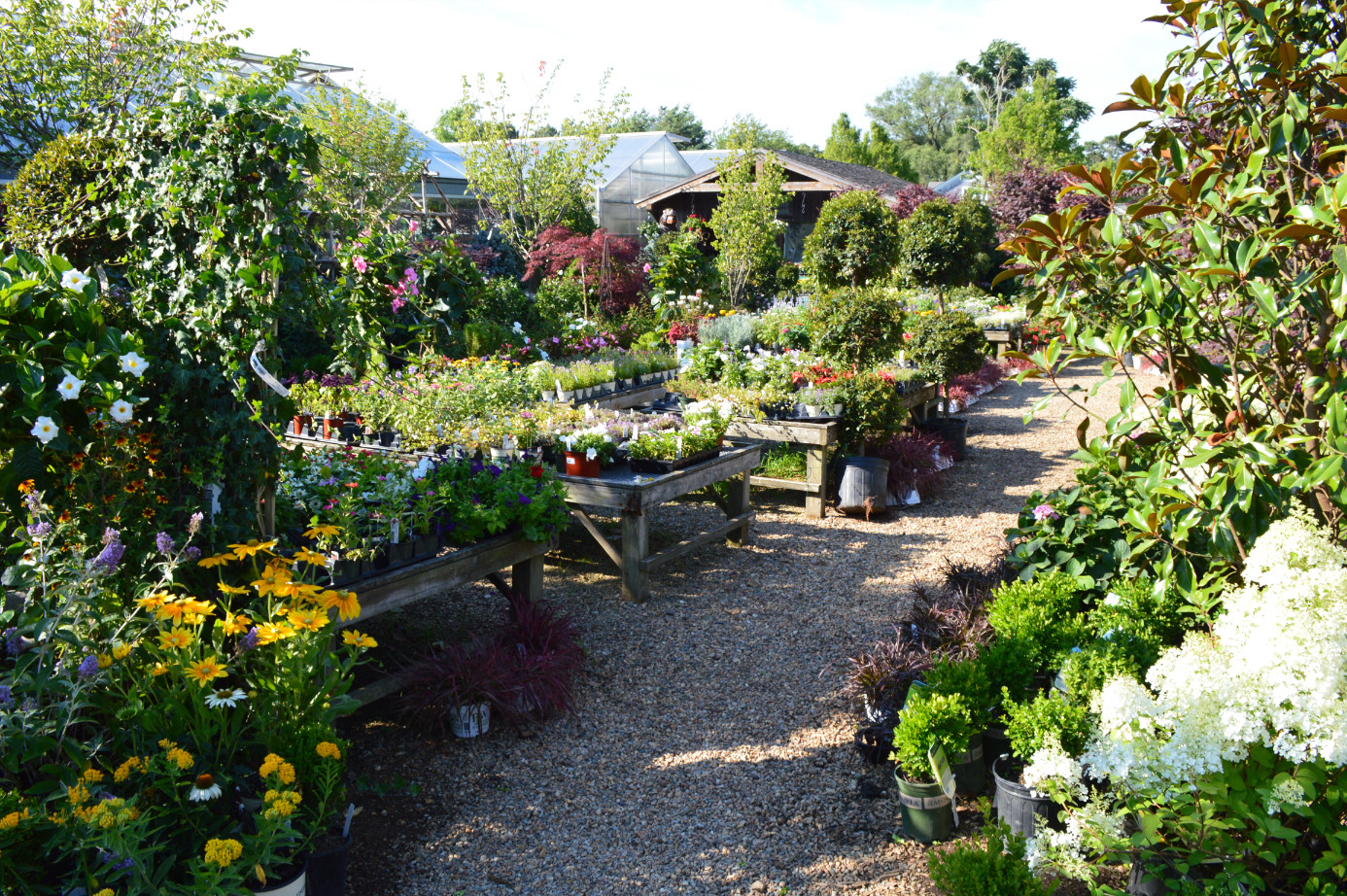 gardens-plants-marthas-vineyard