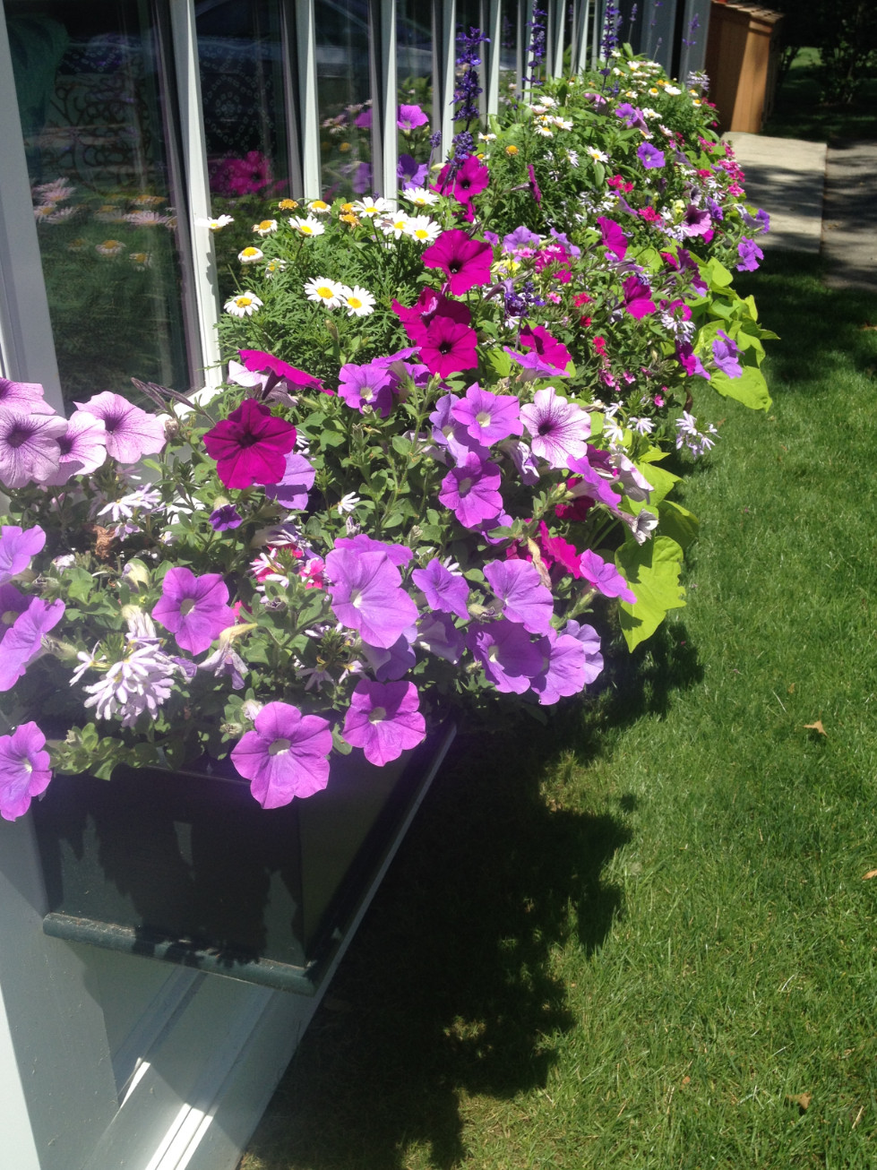 window-boxes-marthas-vineyard